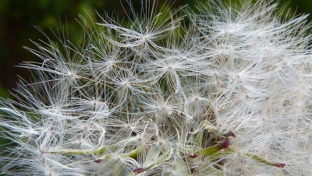 No te confíes con el calor: llegan las alergias y los estornudos