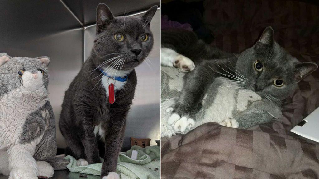 Un gato encuentra consuelo en un peluche tras la muerte de su dueño