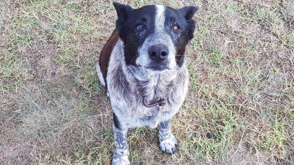Un perro sordo y ciego ayuda a encontrar a una niña que se había perdido