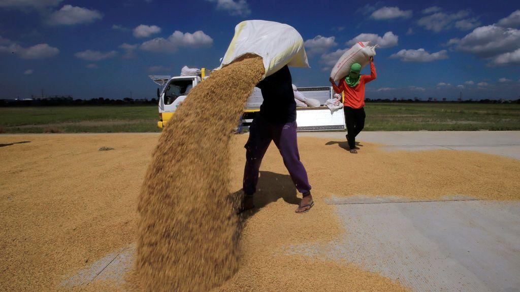 Secado de arroz
