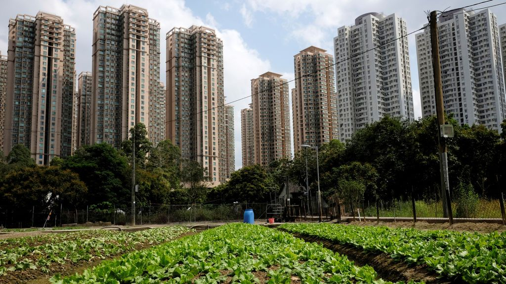 Plantación en medio de la ciudad
