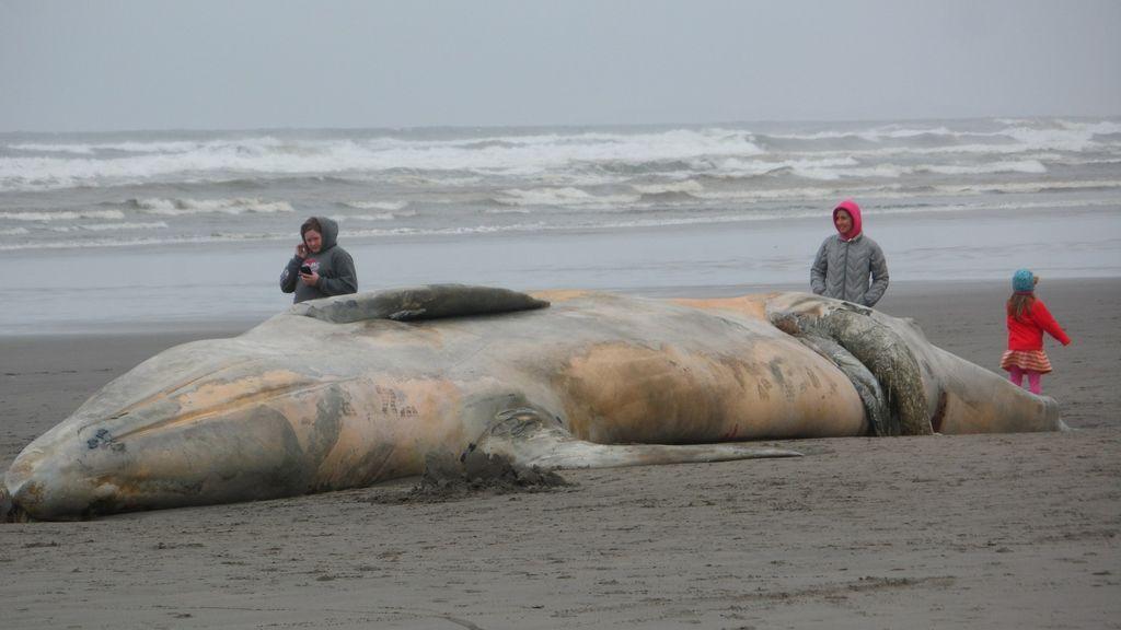 Una ballena de cinco metros amanece varada en una playa de Santander