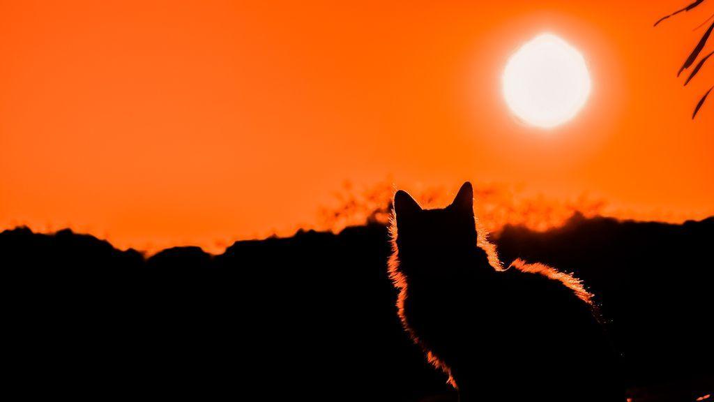 En abril llega el Sol Cenital: el único momento en el que los objetos se quedan sin sombra