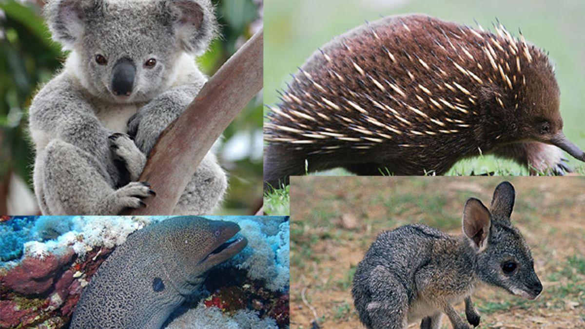 ¿Qué animal soy? Juega a adivinar algunos de los animales más raros del planeta