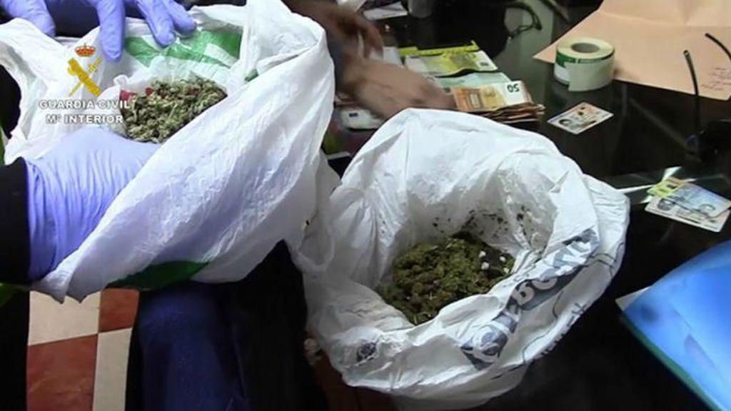 Detenidas 66 personas pertenecientes a cuatro clanes dedicados al cultivo  de marihuana
