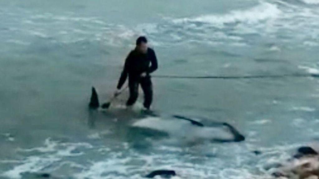 Rescatan un delfín muerto en la orilla de una playa de Castellón