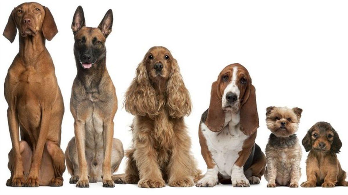 ¿Eres un fanático del 'Encantador de Perros'? Descubre qué tipo de raza eres según tu personalidad