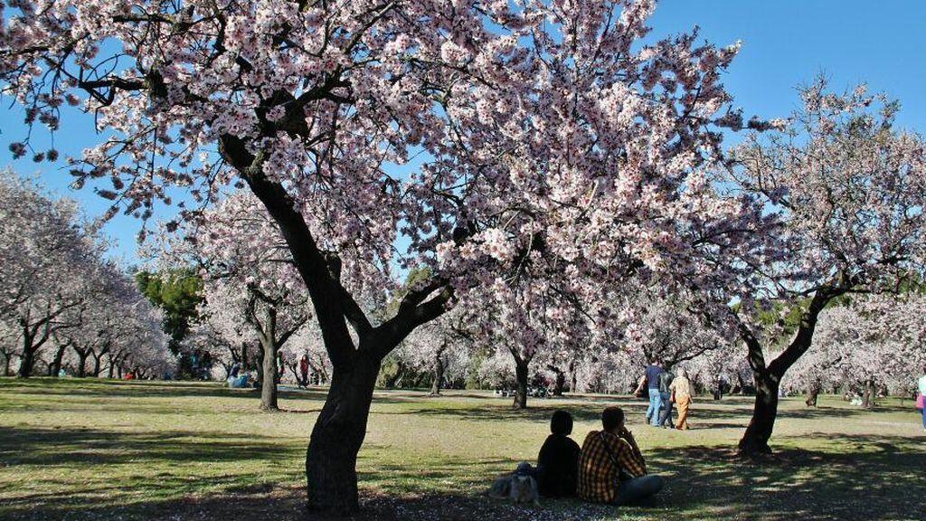 Once sitios para amar la primavera en Madrid y alrededores a menos de una hora