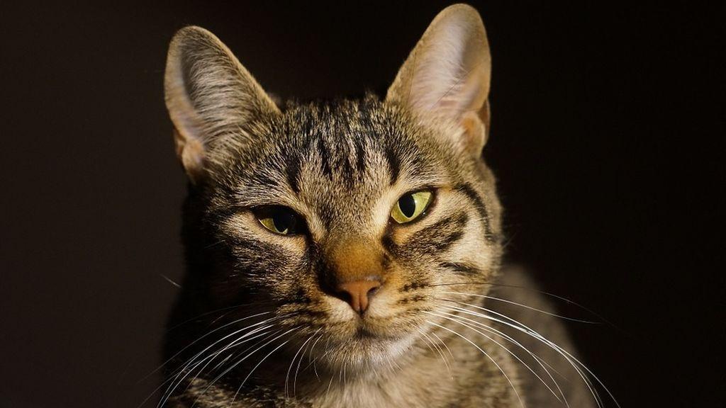 Detenida en Ciudad Real por matar un gato en una lavadora