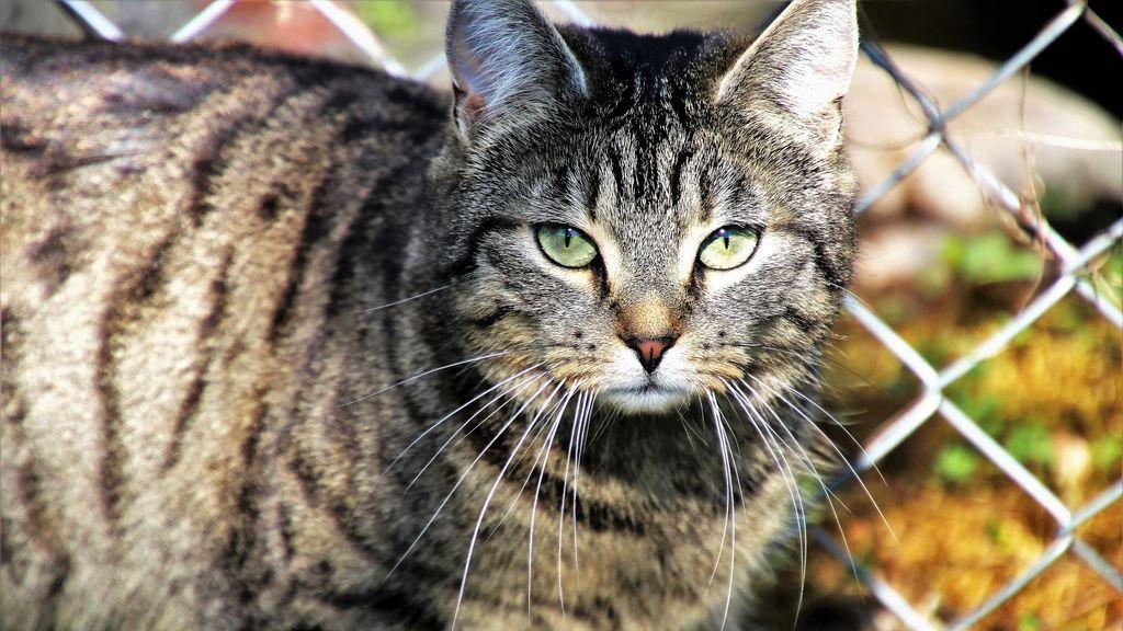 gato desaparecido aeropuerto nueva york aparece