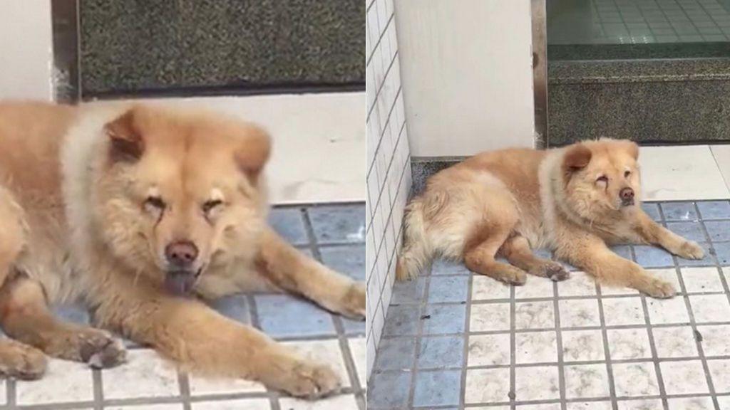 Un perro espera cada día en una estación de tren a que su dueño vuelva de trabajar