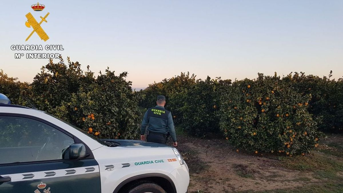 Detenidas 8 personas acusadas de robar  3.700 kilos de naranjas en Córdoba