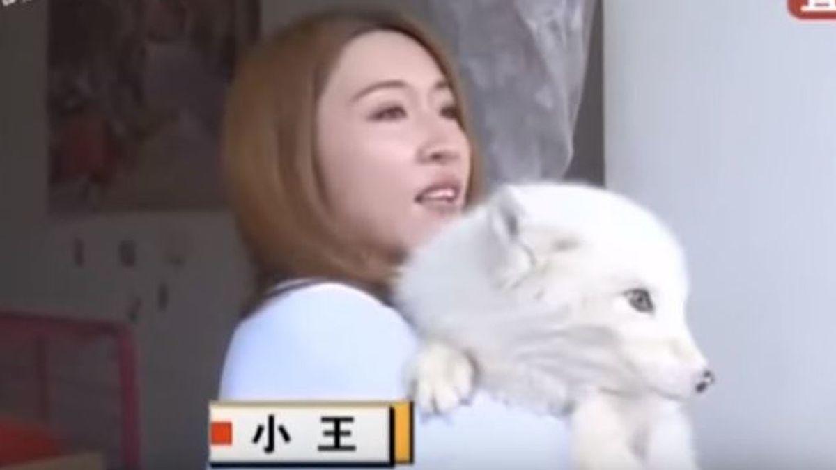 Compra un cachorro por Internet pero cuando crece descubre que se trata de otro animal
