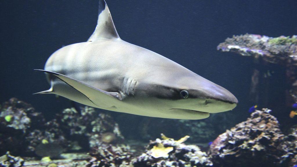 Avistado un tiburón en Fuengirola:  5 cosas que no tienes que hacer si te encuentras con uno