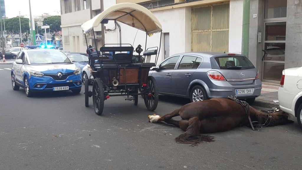 Muere un caballo en Las Palmas tras desplomarse de una tartana
