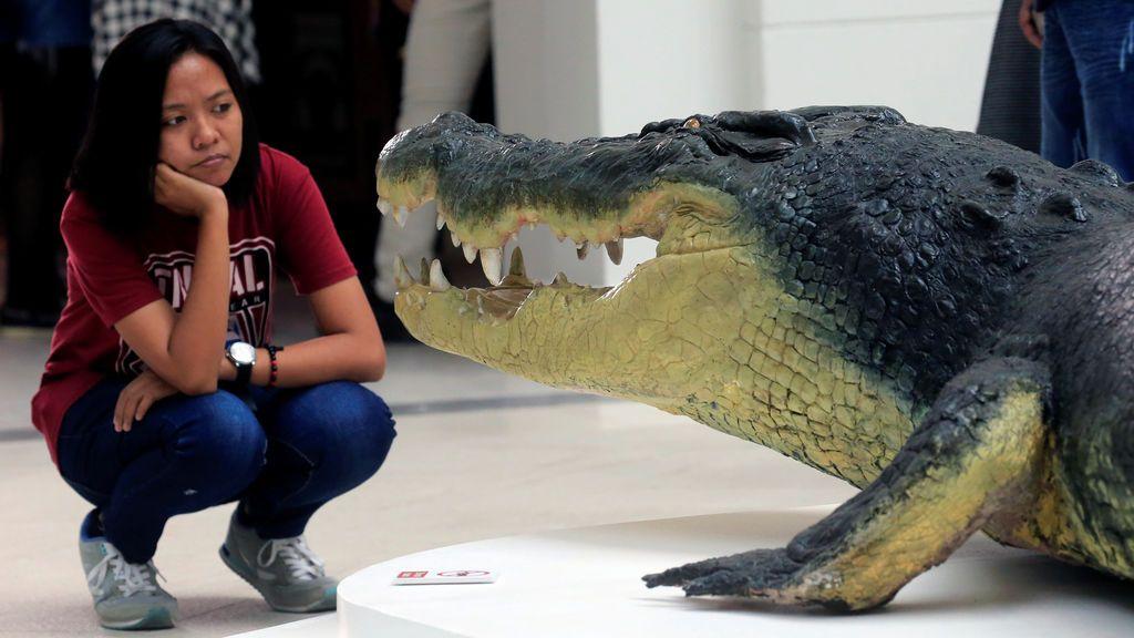 Una chica observa impactada el cocodrilo más grande
