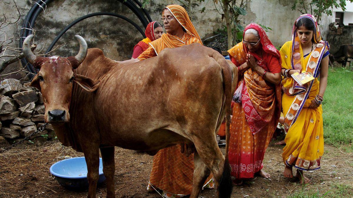 Mujeres indias ante una vaca, animal sagrado en la religión hindú