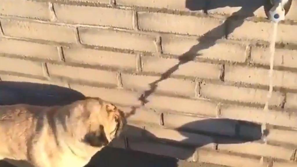 La vida puede resultar muy confusa si eres un perrete que quiere agua