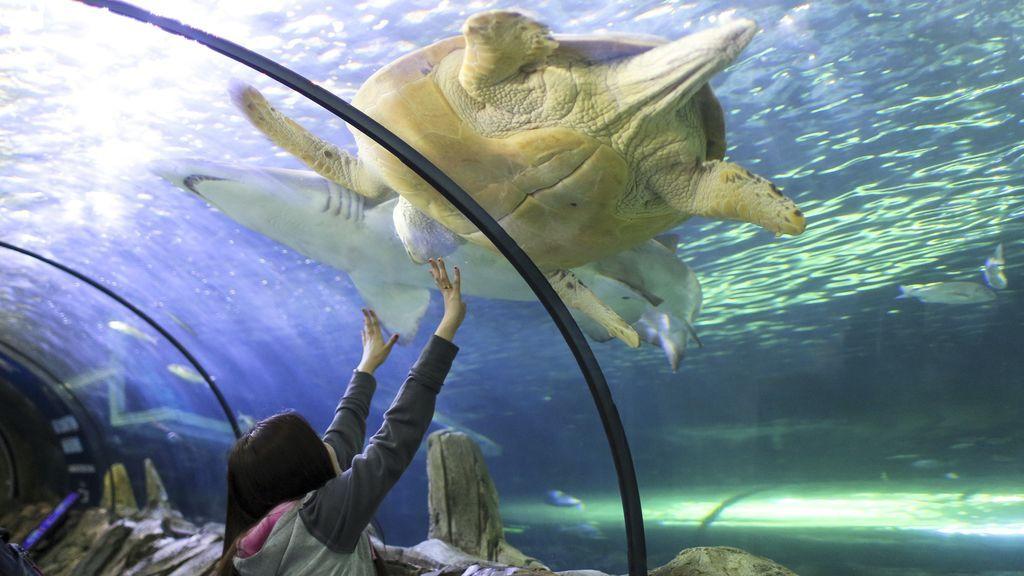 Visitantes disfrutan de los animales marinos del acuario de Sidney
