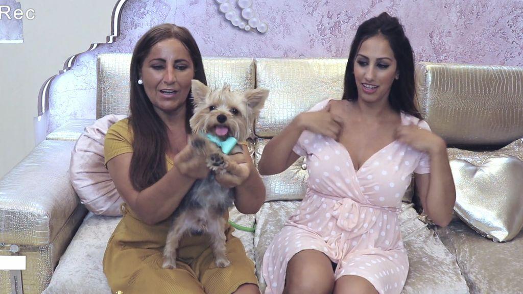 Con cresta, mechas californianas y pajarita: Las Salazar buscan novia a su perro Toby