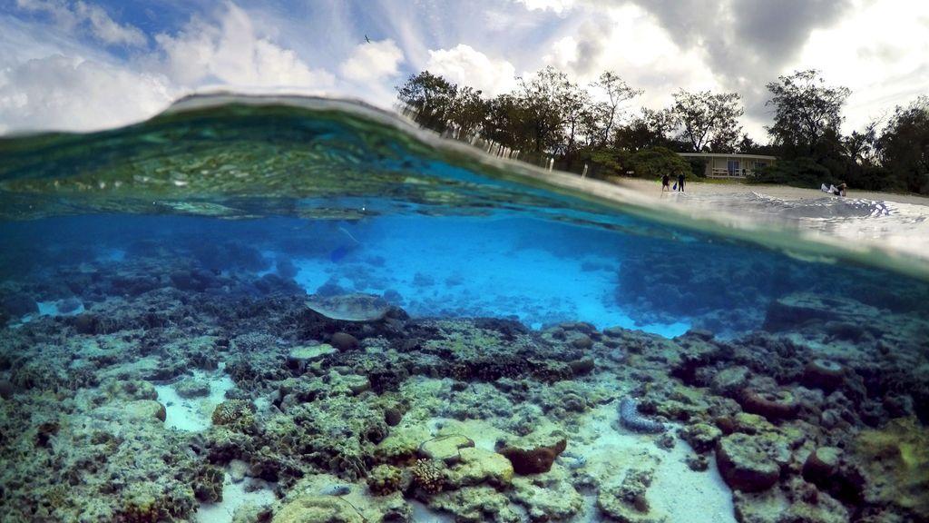 La Gran Barrera de Coral ha 'muerto' cinco veces en 30.000 años