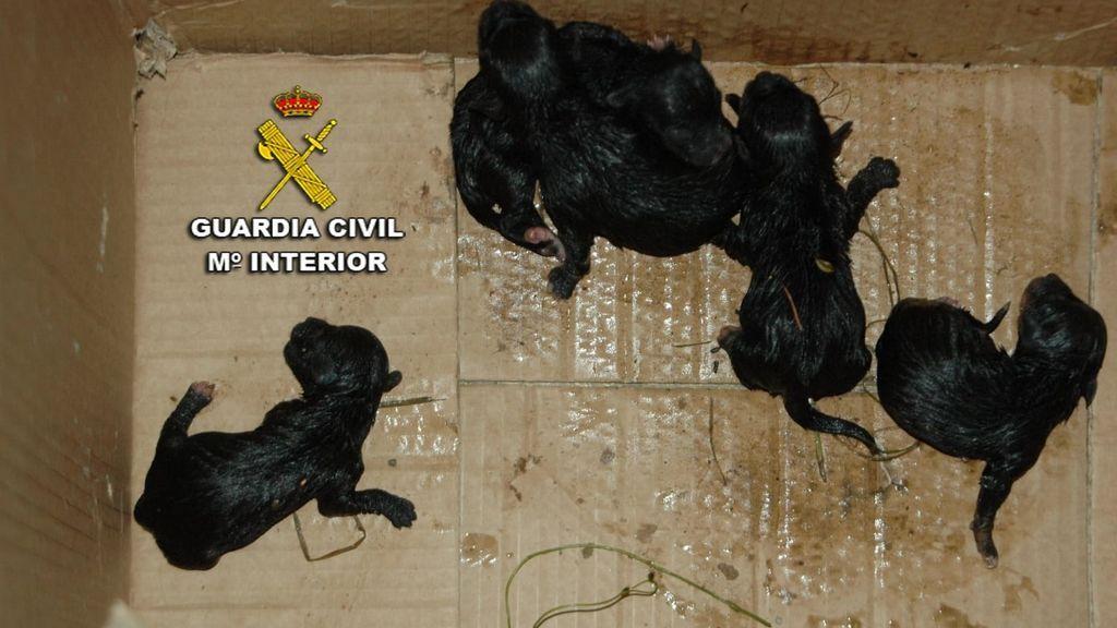 Investigado por maltrato animal tras abandonar crías de perros en la basura en Pontevedra