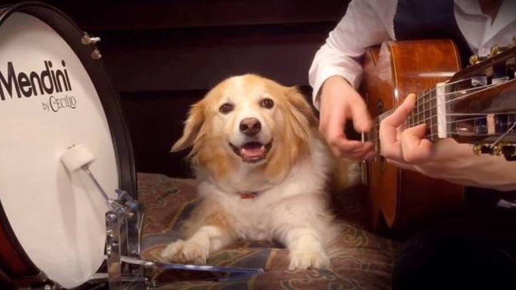 Maple sigue en activo: ¿recuerdas al perrete percusionista que lo petó en Vine?