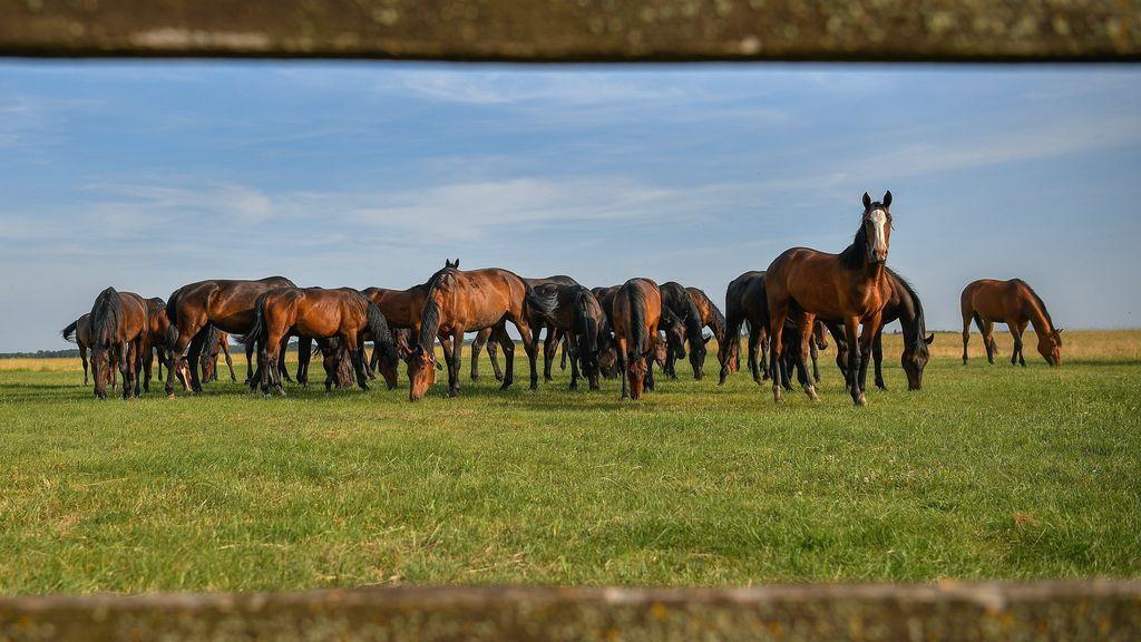 Famoso criadero de caballos húngaro
