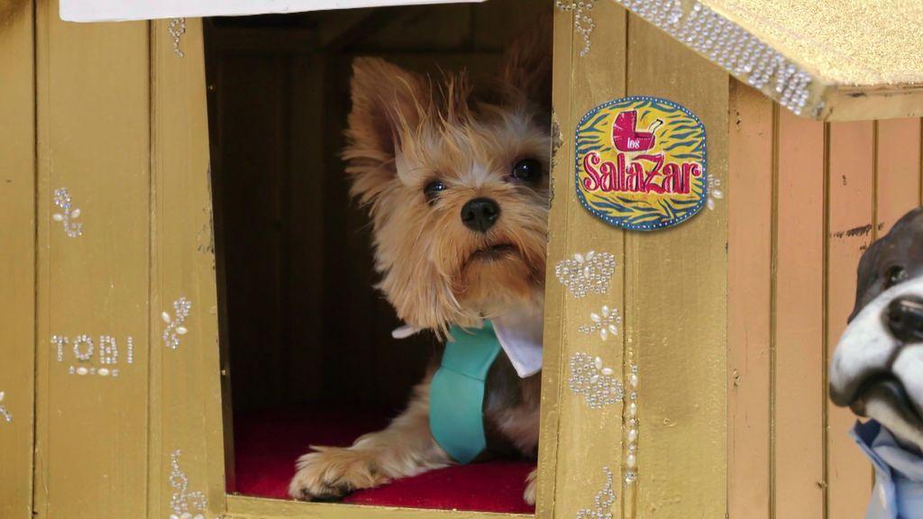 Toby inicia su casting para encontrar novia y acaba ladrando a las candidatas