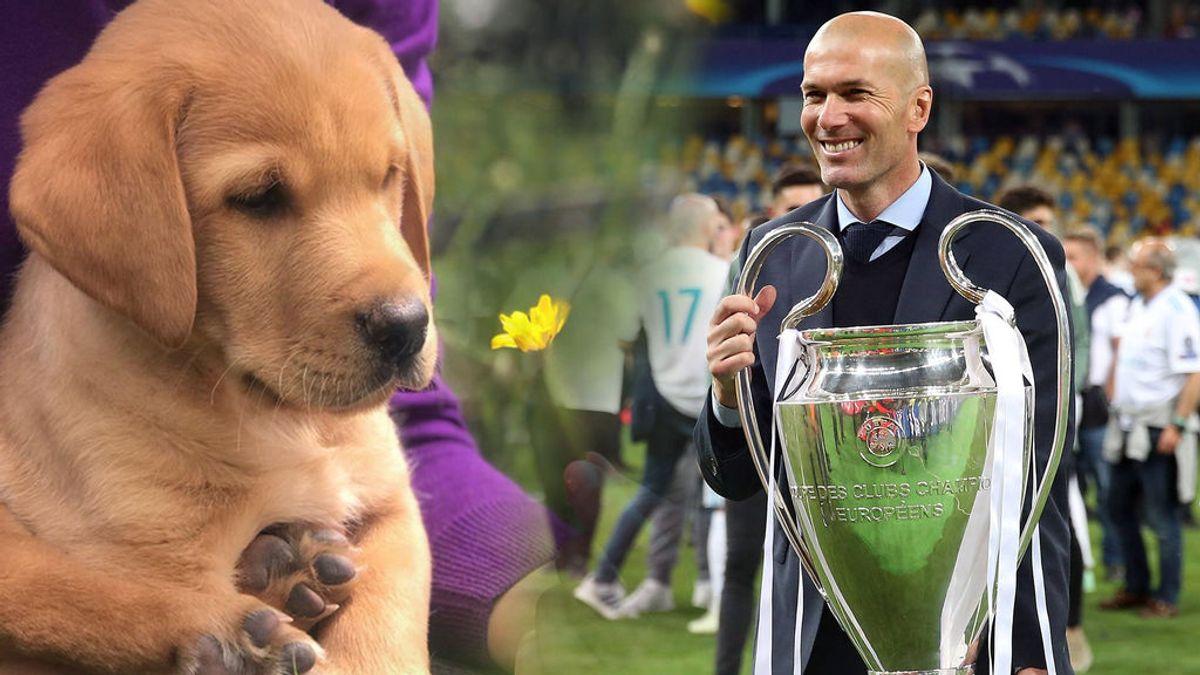 La hija de Florentino Pérez llama 'Zizou' a su nuevo perro tras la marcha de Zidane del Real Madrid