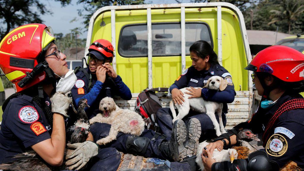 Los bomberos rescatan animales en Guatemala