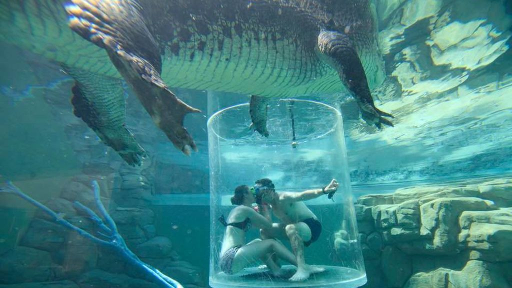 Pedida de mano entre cocodrilos