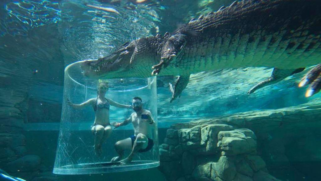 Buceo cocodrilos
