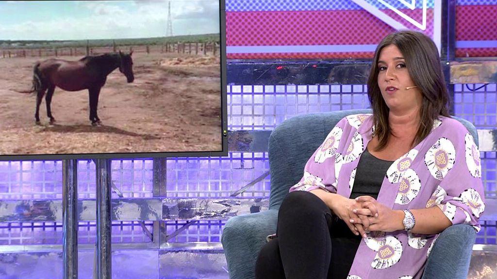 """Anabel Gil Silgado aclara la polémica de los caballos: """"Me dijo que si no los vendía los mataba"""""""