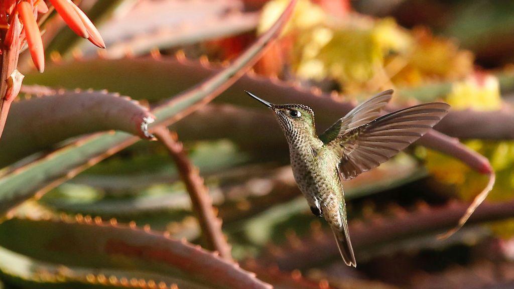 Primer plano de un precioso colibrí