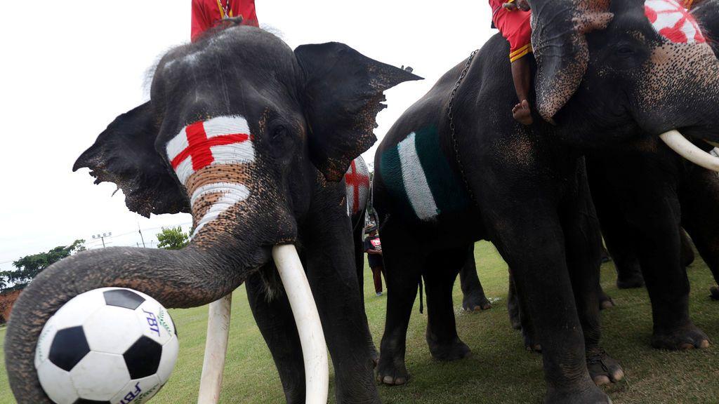 Elefantes futboleros