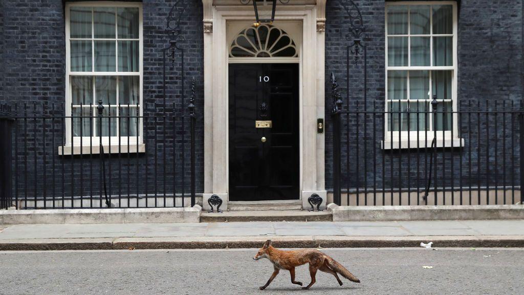 Inusual imagen de Downing Street en Londres