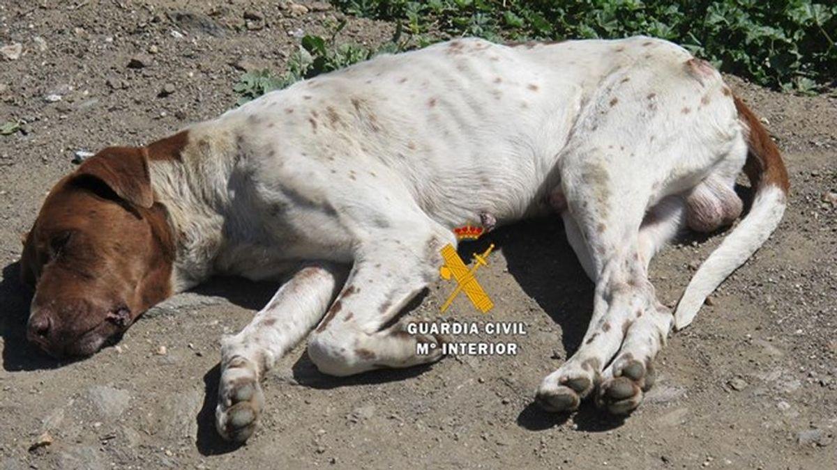 perros abandonados Málaga