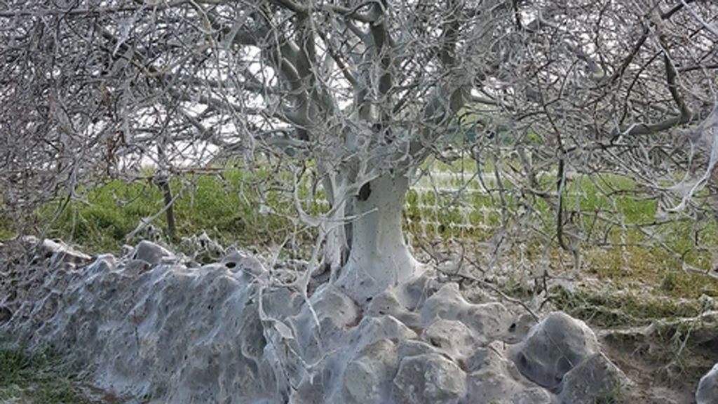 Hallan un árbol espeluznante en Inglaterra