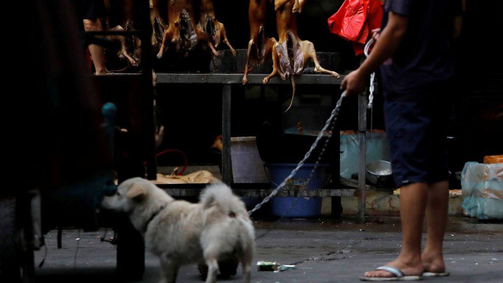 Festival de carne de perro en China