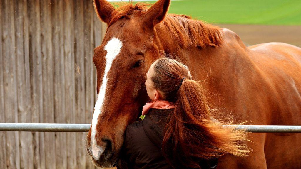 Los caballos nos entienden a través de la voz y las expresiones faciales