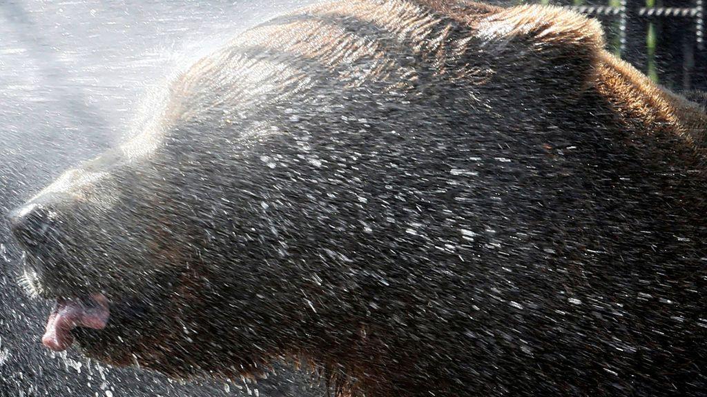 Una ducha contra el calor