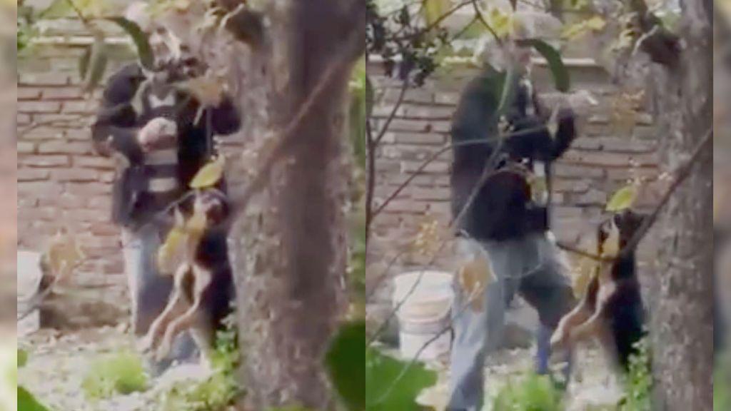 Ahorca a un perro en un árbol de su casa y los vecinos lo intentan linchar