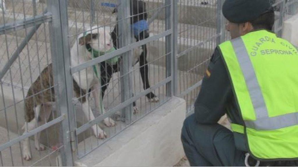 """Muere un anciano atacado por varios perros en Asturias: """"Es una de las escenas más dantescas que he visto en mi vida"""""""
