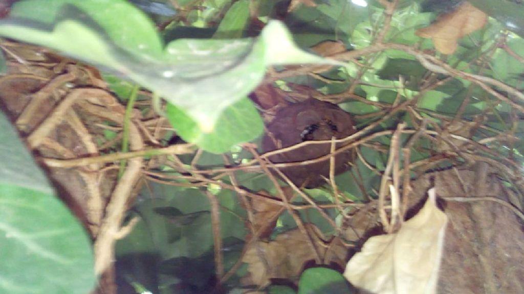 Alerta en Barcelona tras detectarse el primer nido de avispa asiática