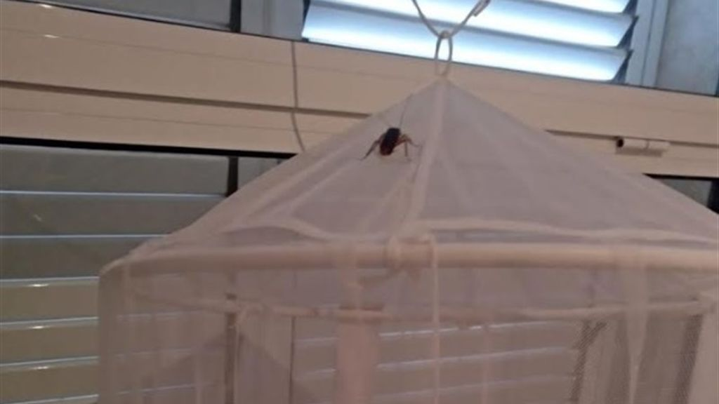 Denuncian plaga de cucarachas en el ambulatorio de l'Eliana con insectos que caen del techo