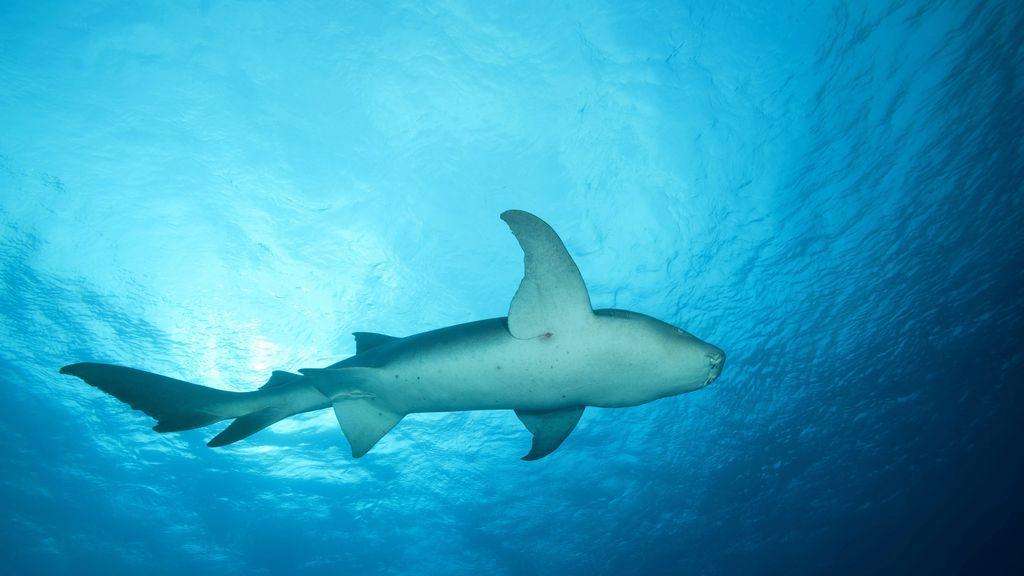 Dos ataques de tiburón en solo 5 minutos obligan a cerrar una playa de Florida