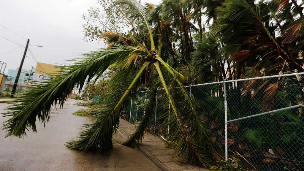 Fallece un niño de 4 años al caerle una palmera en Gran Canaria