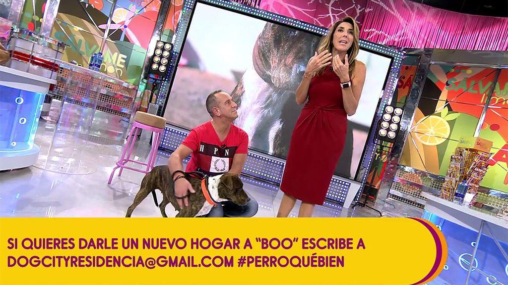 Víctor Sandoval inaugura sección en 'Sálvame' con un objetivo: buscar un nuevo hogar a perros abandonados