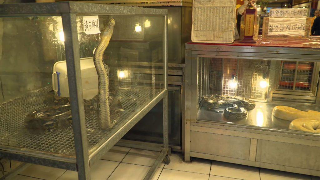 'Viajeros Cuatro' cena un menú degustación de serpiente en un mercado nocturno de Taiwán